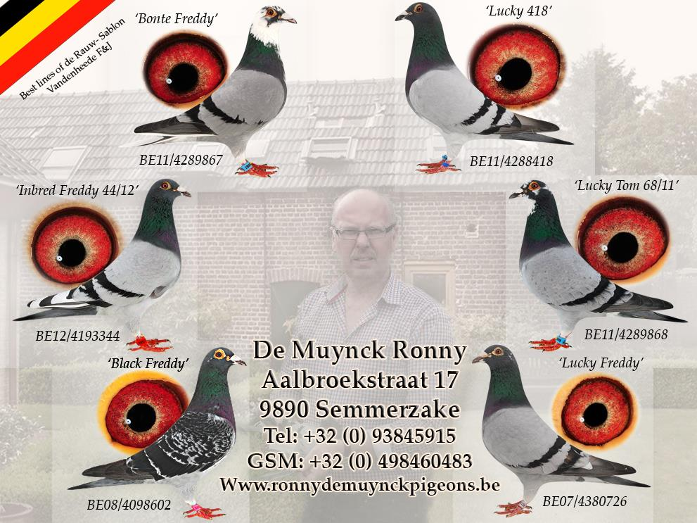collage Ronny 2