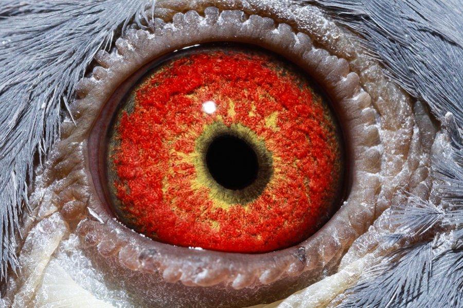 Kop 11 Cees oog
