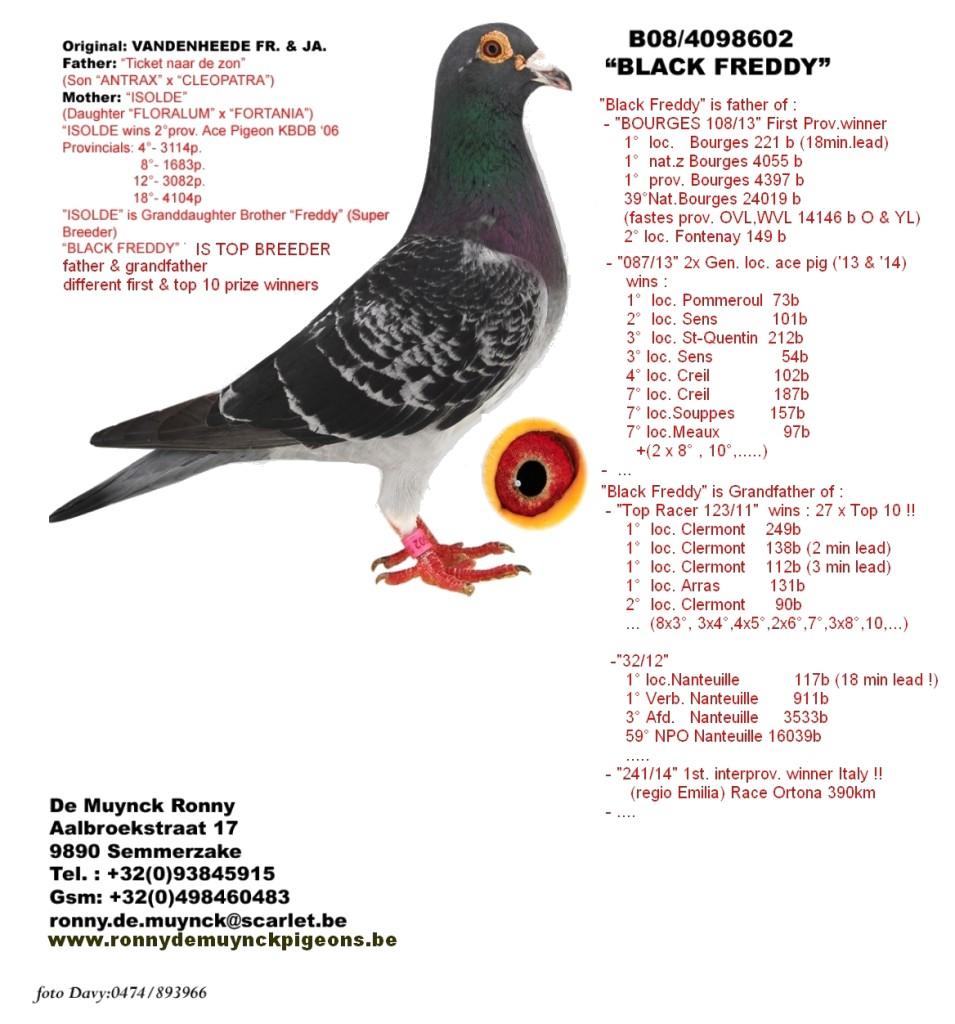 kop 20 Black Freddy 602-08 vader duivin 110-15