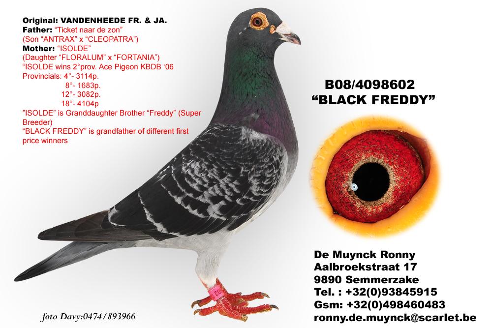 kop 15 black freddy