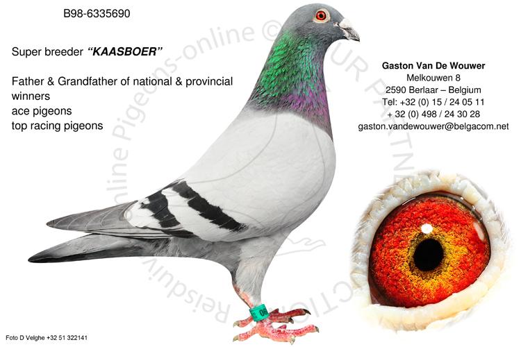 kop 19 BE98-6335690_super_breeder_Kaasboer