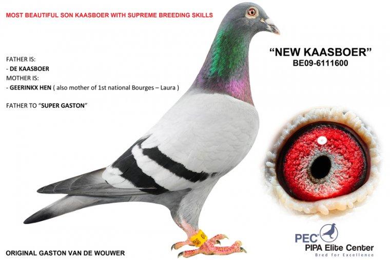kop 20 be09-6111600 New Kaasboer